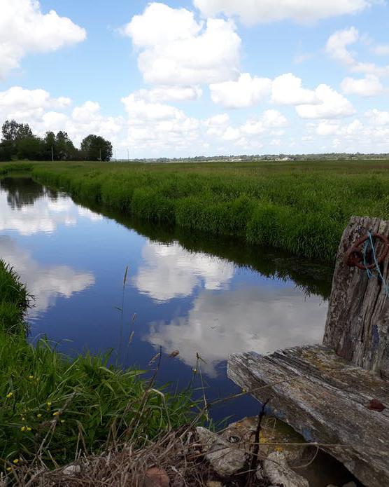 Le Marais du Rivage à Auvers, en début d'été 2020.