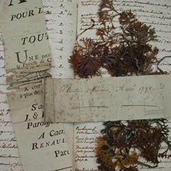 Herbier Le chevalier le Jumel (algues) 1798