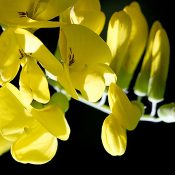 La chimie verte, une alternative durable s'inspirant de la nature