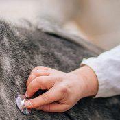 Protéger la filière équine contre l'herpèsvirus équin-1